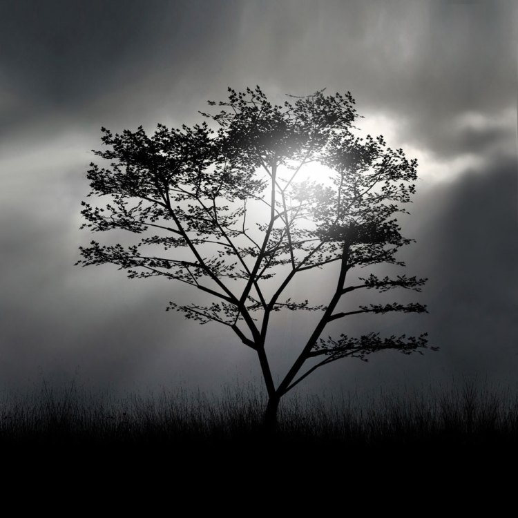tree-silhouette-ipad-background