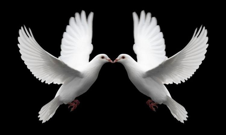 Pair_of_White_Doves_Symbolize_Love